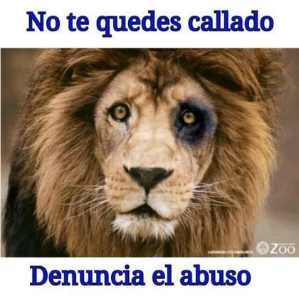 leon con ojo herido